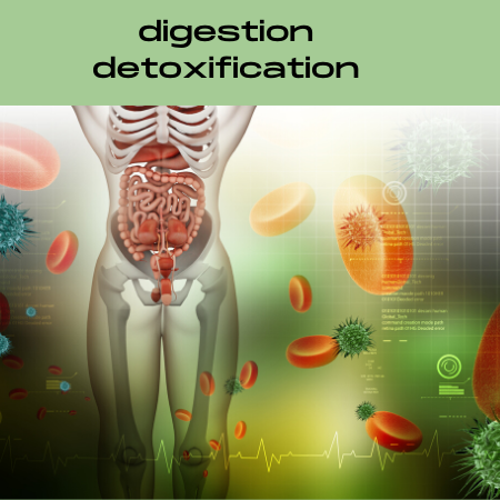 Digestion and Detoxification